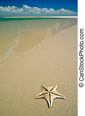 Tropical beach - Scenic tropical beach with starfish in the...