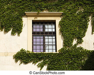 Ivy window - Old style windows on the central european...