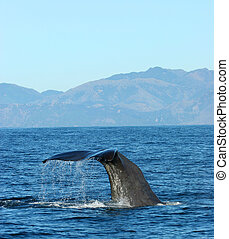 Whale watching in NZ - Whale watching in Kaikoura, New...