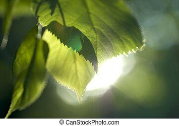 primavera, sol, hojas, fresco, vigas