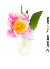 Pink tulip in a vase, isolated