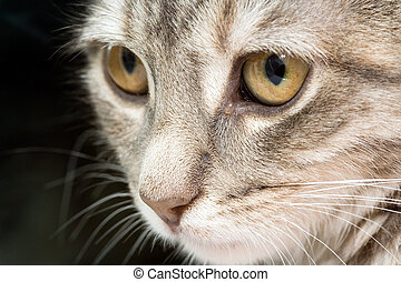Intense Gaze - A cat staring intensely