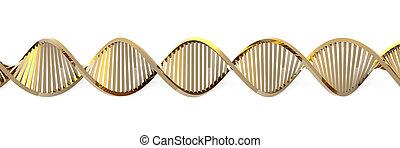 dorado, ADN, hélice
