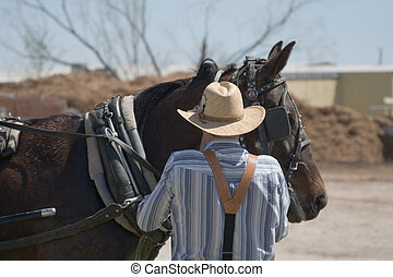 Mennonite Man and Horse - Mennonite man tends to horse...
