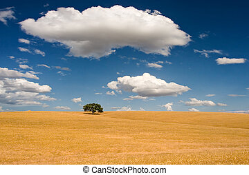 Summer Scene - Quiet view over an open field of farmland...