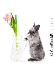 Bunny near the vase