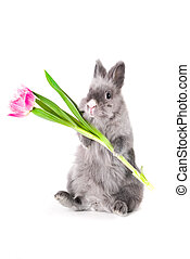 Bunny holding a tulip, isolated