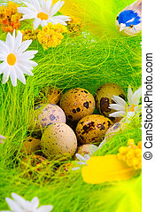 Nest with eggs aming flowers
