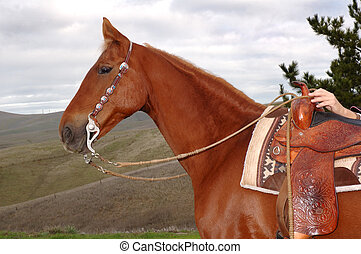 Saddlebred in western - Saddlebred stallion with western...