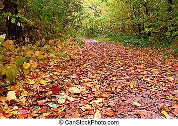 Beautiful path with colorful foliage