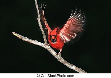 Vogel, Nacht