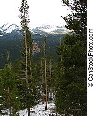 Rocky Mountain Nat\\\'l Park - The trees and mountains of...