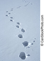 Footprints in the snow making a wavy path.