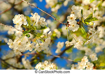 Blooming tree on the blue sky background