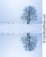Solitude Standing - Lonely tree in snow field reflected on...
