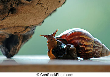 Funny snail - A close up shot of funny snail resting beside...
