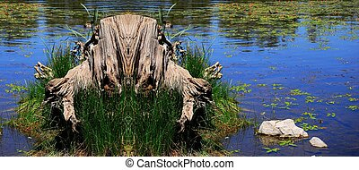 The Edge of Life 2 - Tree stump panorama at the edge of a...