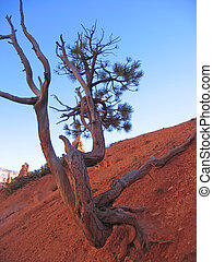 A dead tree in a wild dry hill, Bryce National Park, United States