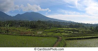 Cara ricefields, Ruteng, Flores, Indonesia, Panorama - Cara...