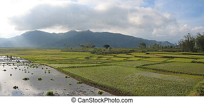 Cara ricefields with cloudy sky, Ruteng, Flores, Indonesia,...
