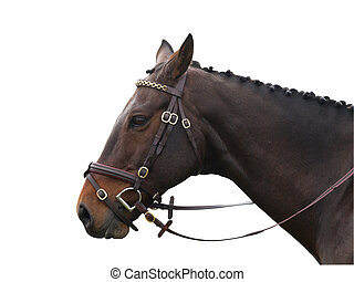 Buckled Up - A bay horse head with a Fancy bridle isolated...