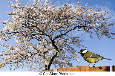 Blossoming tree - Singing Bird in front of a Blosseming tree