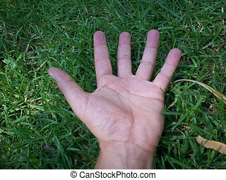 Behold - picture of a hand all alone set in front of a lush...