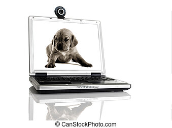 Laptop with a webcam over the table with a image of a pupie...