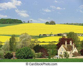 Wiltshire landscape - Landscape shot taken near Salisbury in...