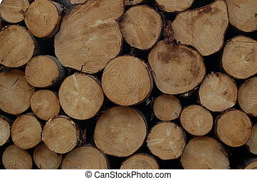 logs3 - logs stored after felling, forest of Dean, England,...