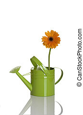 Green watering can with a flower isolated on white