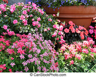 Spring Flower Pots - masses of flowering annuals in large...