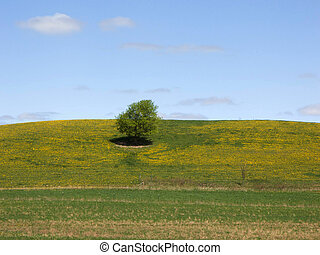 Tree on hillside - Photo of a tree on a hill full of...