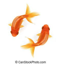 dos, goldfish, natación, círculos