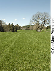 Clipped Lawns - A freshly clipped lawn in front of an...