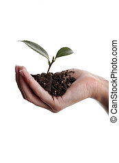Seedling in hand new life - Seedling and soil held in hand...