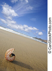Beach Nautilus - Nautilus on the waters edge on sandy beach...