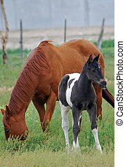 Mare and foal - Chestnut mare with black and white foal.