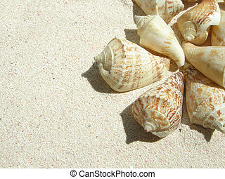 beach shell - closeup of a shell in the sand on a tropical...