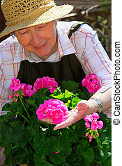 Senior woman gardening - Senior woman with a pot of geranuim...