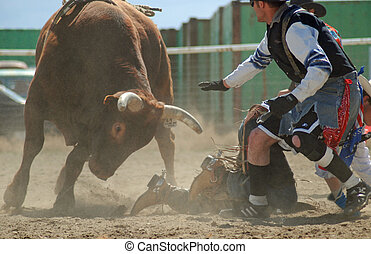 Bull with Rodeo Clown - Rodeo clown protecting bullrider on...