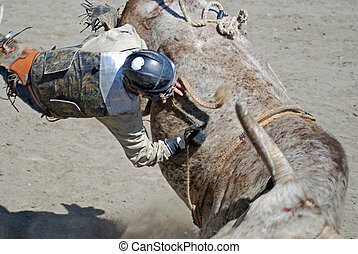 Bullrider Hanging on - Bullrider hanging on as he is being...