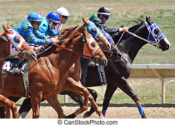 Race Horses - Quarter Horse racing in Utah