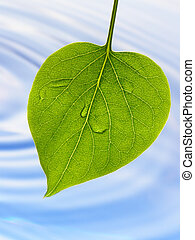 green leaf and blue water - Fresh green spring leaf against...