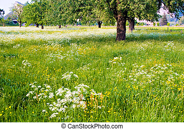 Flowered Field - A green flowered field with trees