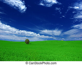 Green Country Field