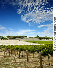 Vineyard Landscape - Australian Vineyard Landscape