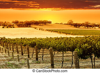 Vineyard Sunset in the Barossa Valley