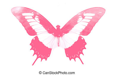 delightful butterfly - butterfly collection - delightful...
