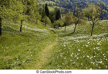 path - lonely path through flower field in countryside